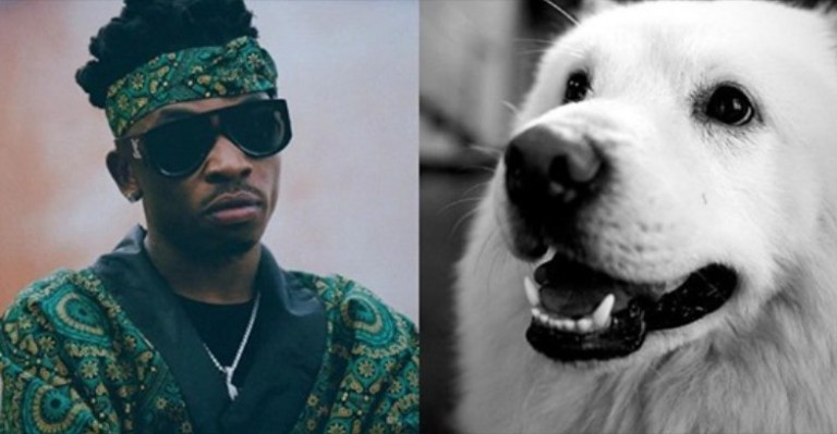 See Crazy reactions as singer, Mayorkun mourns the Death of his adorable Pet Dog